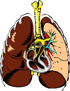lungs, heart, anatomy - learn surgery online