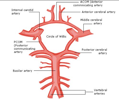 blood-supply