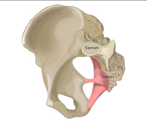 sciatic-foramen