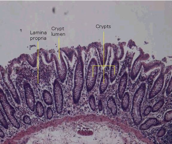 the-mucosa