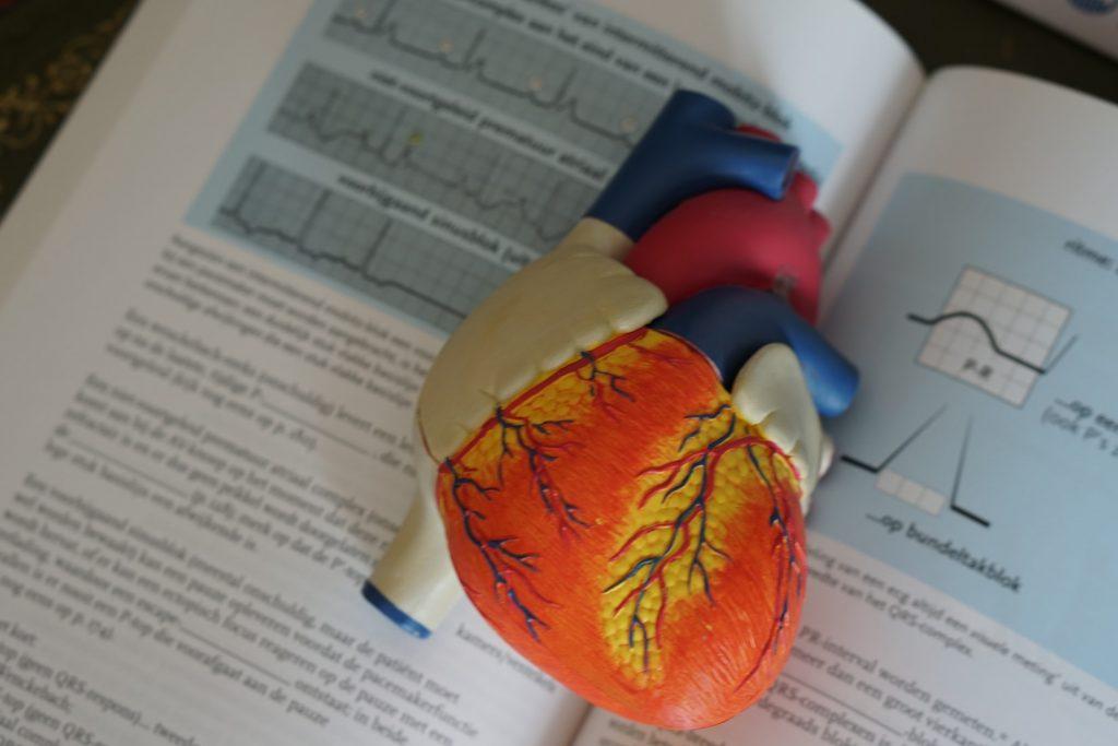 Anatomy-Heart